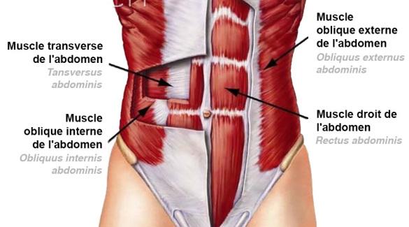 anatomie-abdominaux-ventre-plat